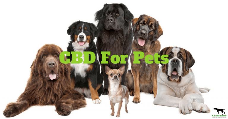 All About CBD For Pets And Its Benefits